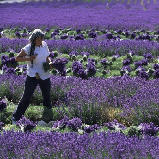 Provence e Languedoc