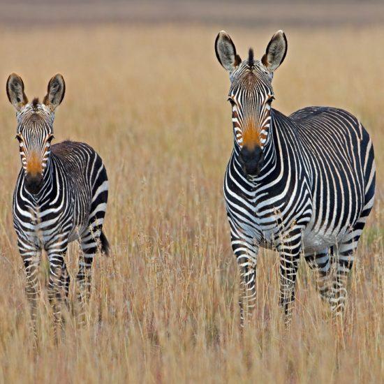 África do Sul 12 dias